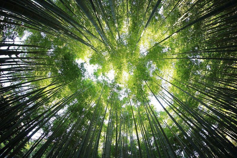 La forêt indemne pour lutter contre la déforestation