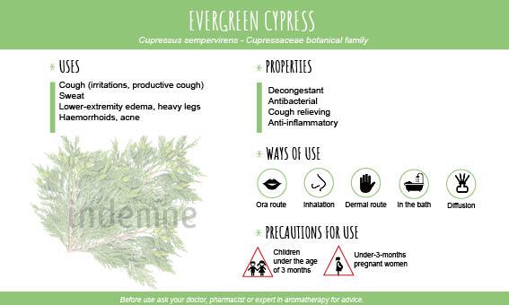 Evergreen cypress essential oil