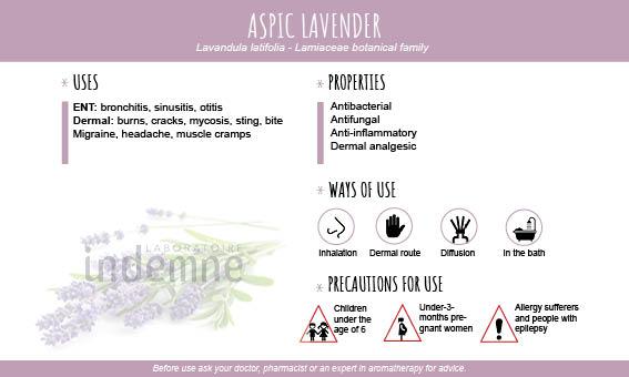 Aspic lavender essential oil